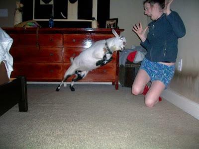 Una mujer a punto de ser golpeada por cabra