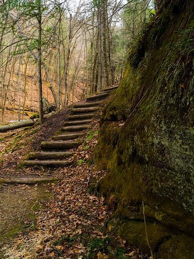 First steps on the Hemlock Trail - Mt. Pisgah Hemlock Hardwoods State Natural Area near Ontario Wisconsin