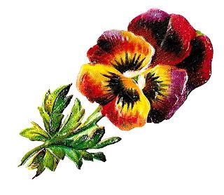 floral botanical art flower pansy wildflower illustration image download