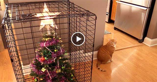 10 Hilarious And Useful Ways To Survive Christmas With Cats!