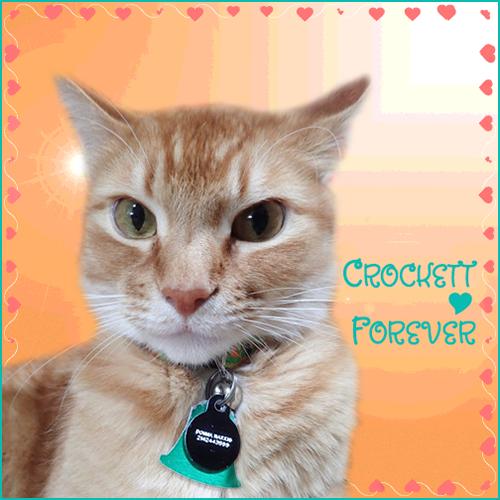 beautiful ginger tabby cat