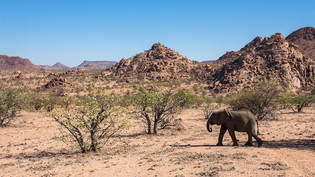Mowani Camp Damaraland, Namibia - desert elephants
