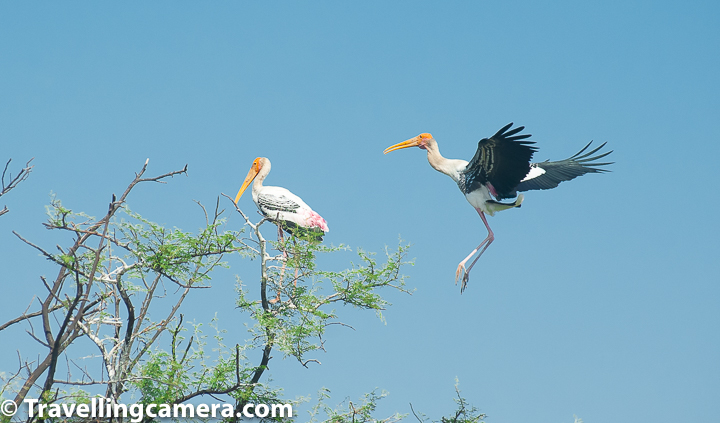 Now that you have basic tips and the itinerary available, let's dive deep into some of the specific aspects of this trip. But before that would you be interested in knowing a little more about Bharatpur Bird Sanctuary so that you can appreciate the place in much better way.     Let me increase the excitement level a little up by sharing that Bharatpur National park has 300+ bird species and thousands of birds in winters. Lot of national and international tourist and bird/wildlife lovers visit the place every year to appreciate the beauty of these winged wonders.     Related blog-post - Birds of Prey at Keoladeo National Park || Watchful Eyes that Track your Every Movement