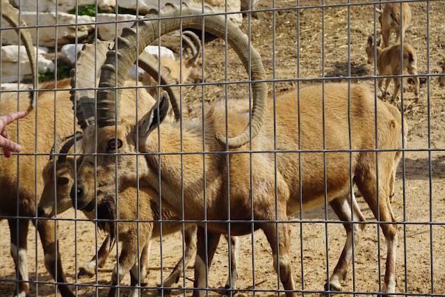 חיות בשפך נחל לכיש אשדוד