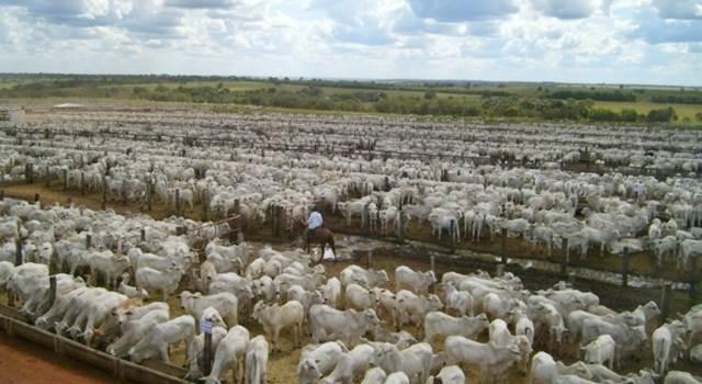 Rebanho da Bahia é o terceiro maior do país e terceiro pior em produção