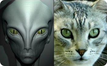 São os gatos extraterrestre e estão nos espionando?