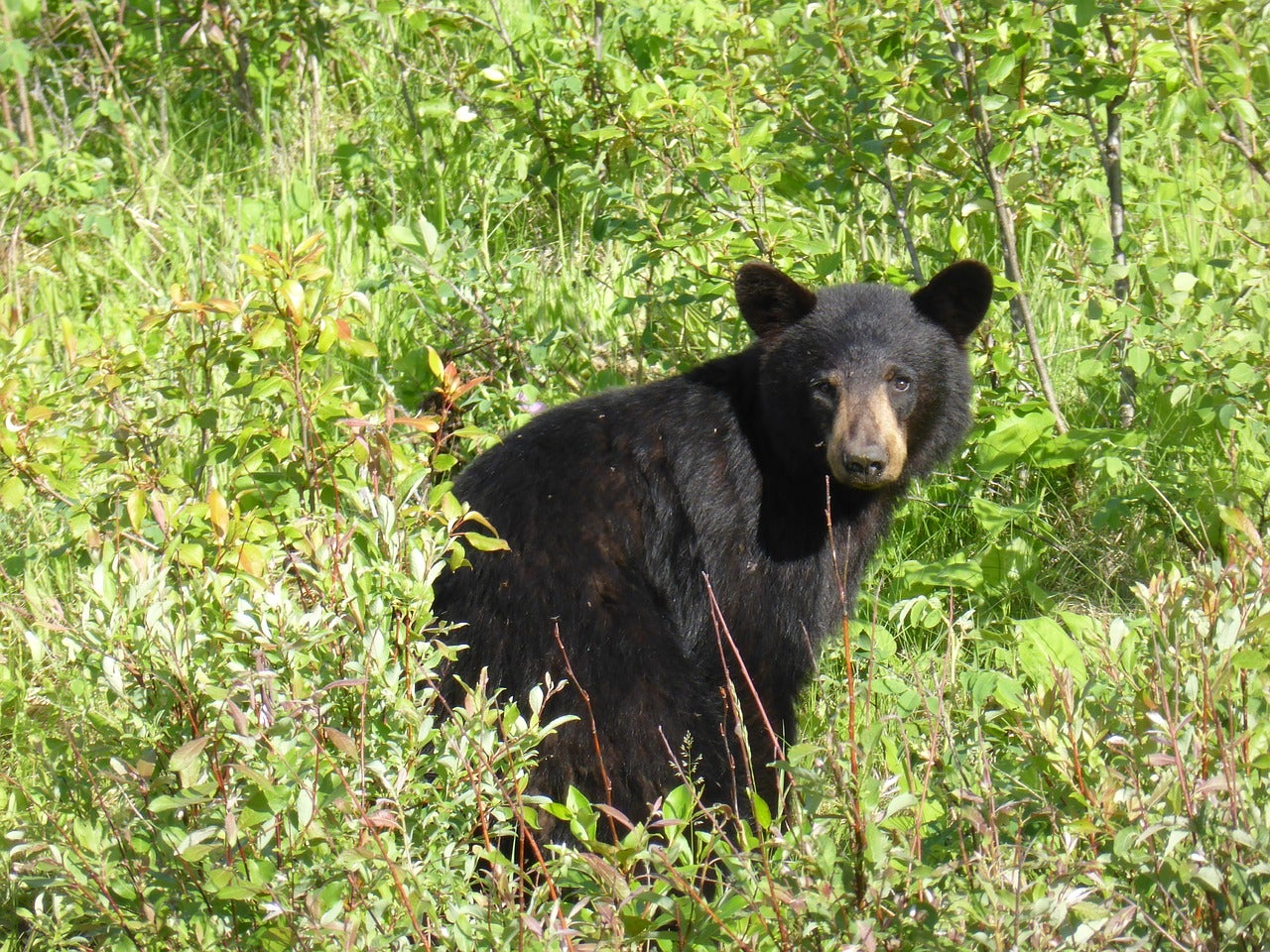Bear Cub Was Euthanized For Being Too 'Friendly'