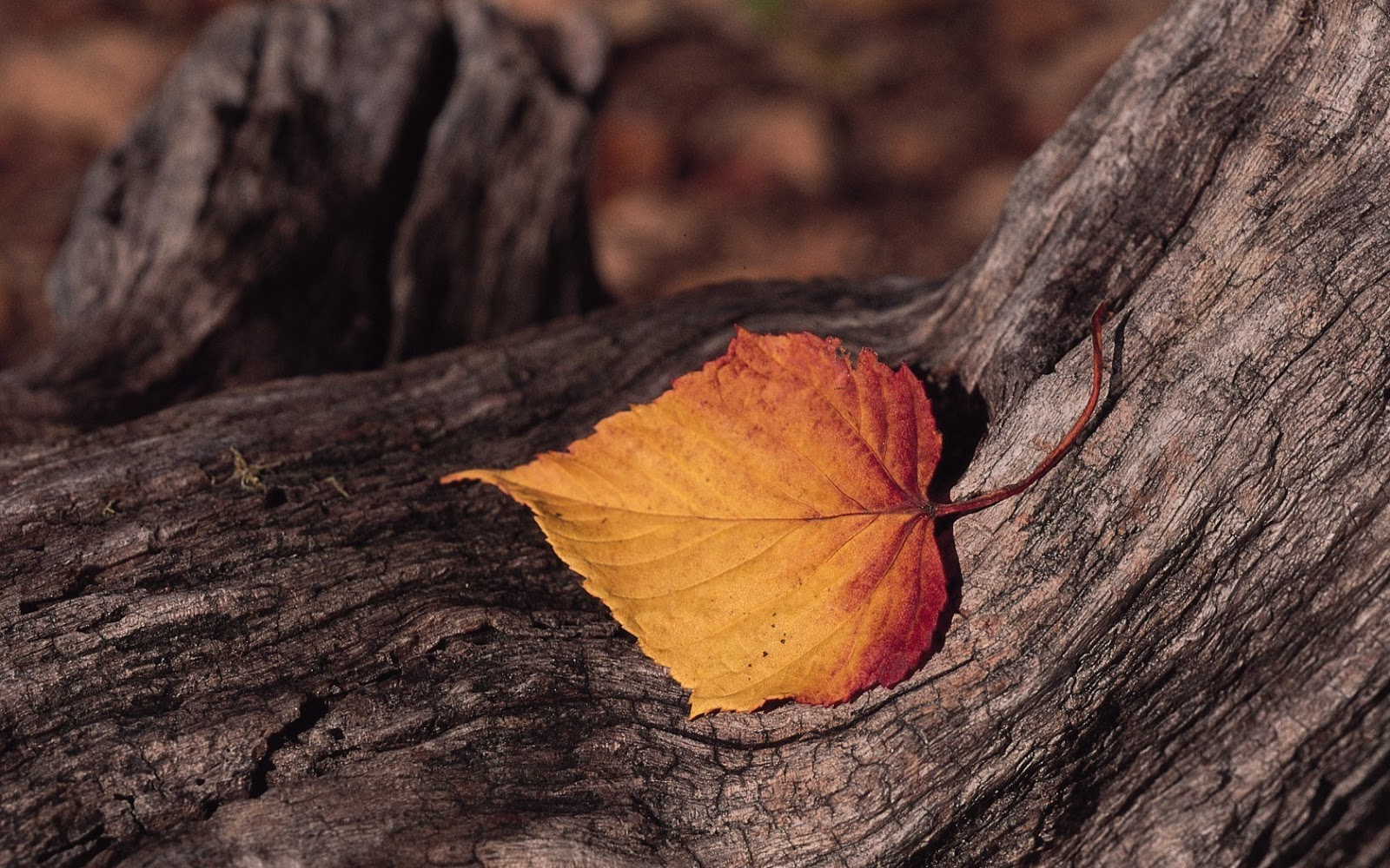Fall Foliage Wallpaper Hd صور خلفيات أوراق الشجر جميلة عالية الدقة مداد الجليد
