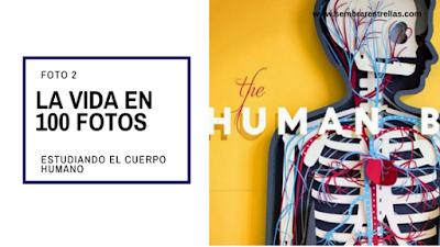 Fotos sobre familia, educacion, estimulacion, crianza. App educativo, La vida en 100 fotos, Explorando el cuerpo humano.