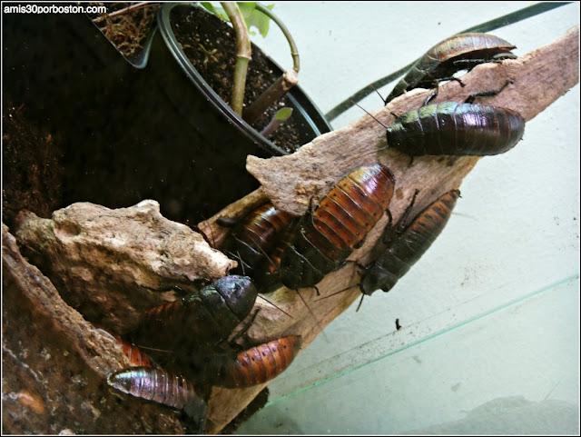 Texas Discovery Gardens: Cucarachas