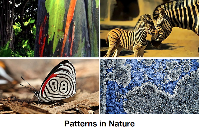 animal patterns in nature - photo #32