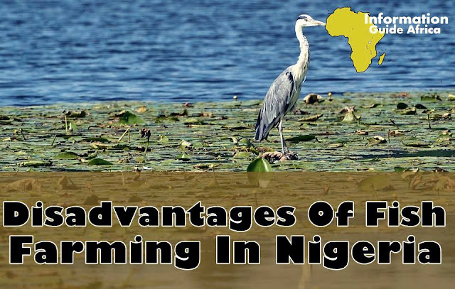 Disadvantages Of Fish Farming In Nigeria