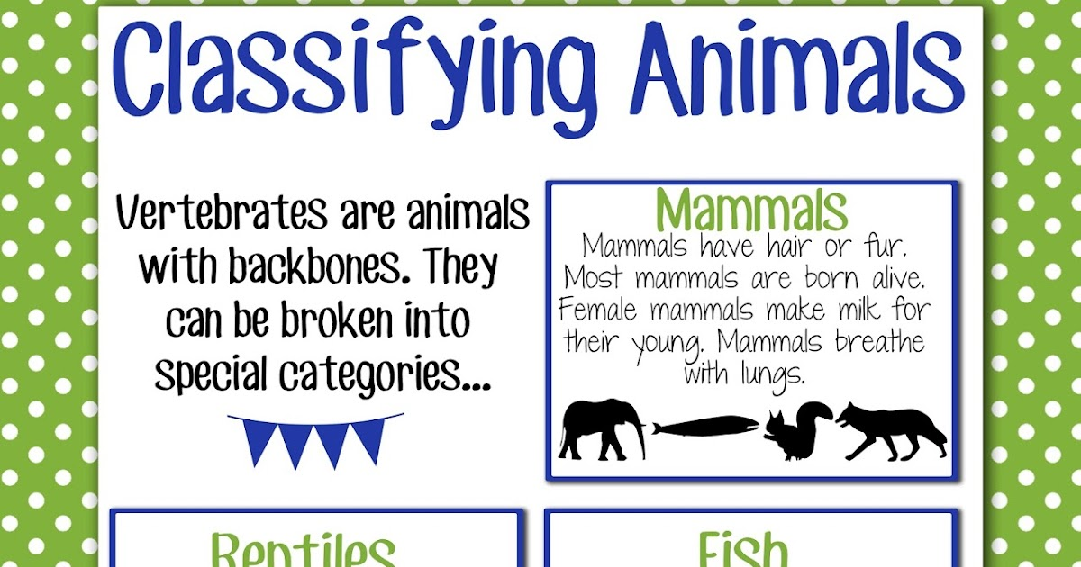 Magic & Markers: Classifying Animals