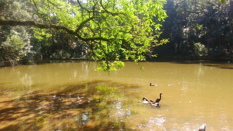 Lago do PEJ, lar de biguás, frangos d'água e outros animais. Foto: acervo Natasha Ceretti