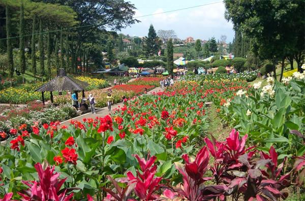 Para penggemar tanaman bunga wajib datang ke Kebun Bunga Cihideung