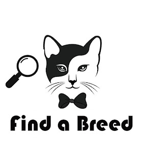 Find a Cat Breed Alphabetically