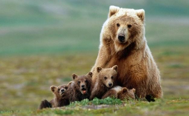 Lima Hewan Berpenciuman Terbaik di Dunia