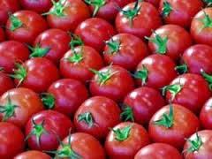 الفوائد الصحيه للطماطم Benefits of Tomatoes