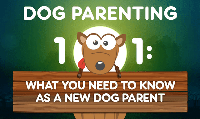 What You Need To Know As New Dog Parent