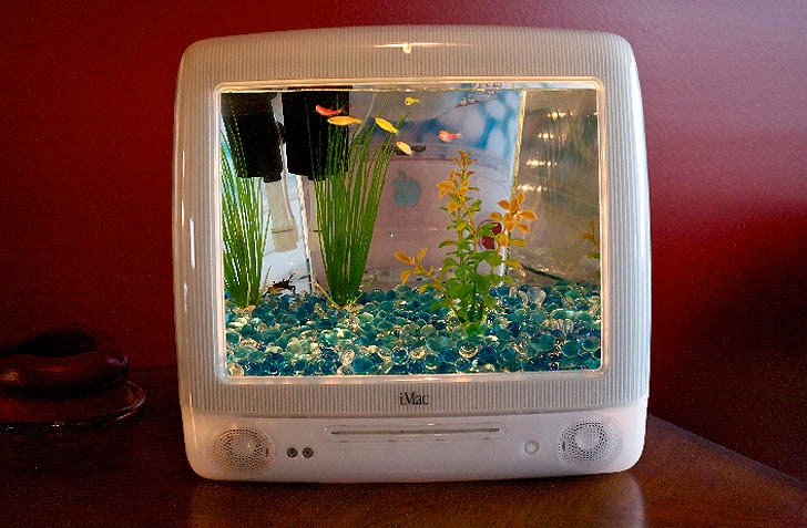 What Is Room Temperature Water For Fish