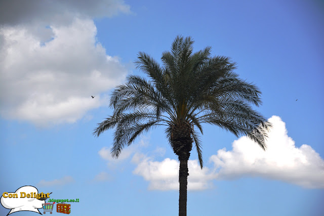 palm tree with a tiny bird