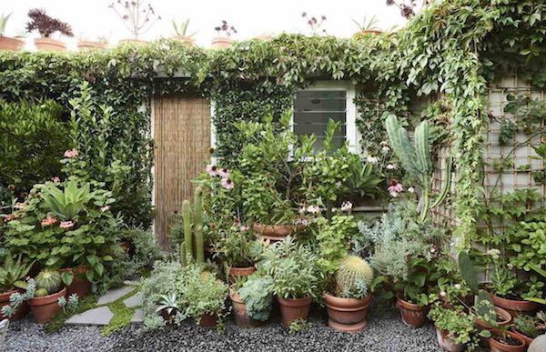 jardín pequeño-plantas terracota-trepadoras