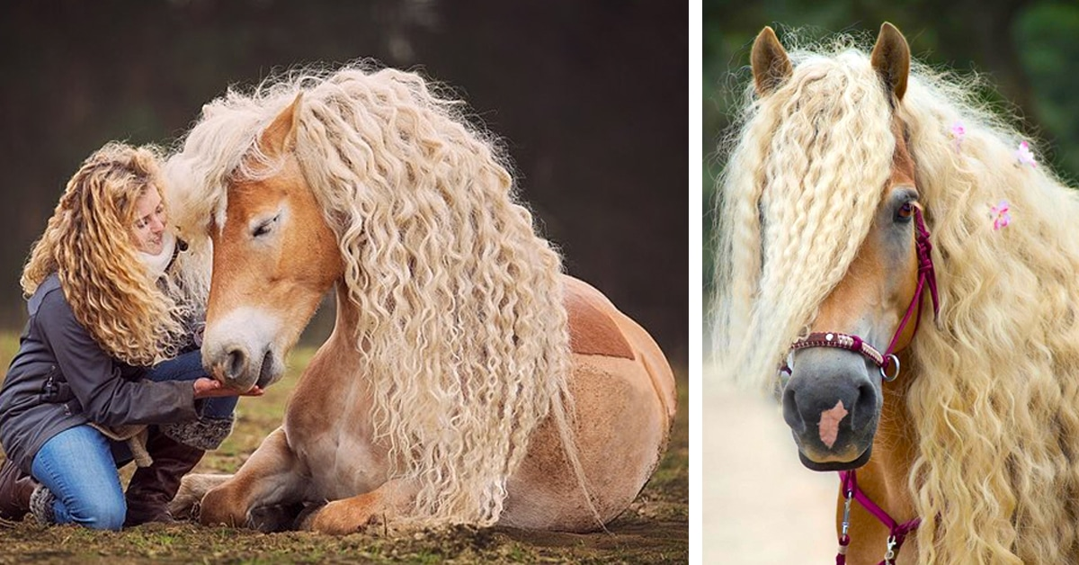 Breathtakingly Beautiful Horse Captured Everyone's Hearts With Its Exotic Mane