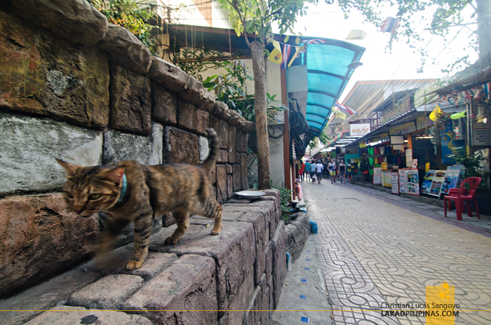 Koh Phi Phi Street