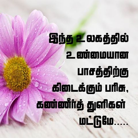 latest tamil feeling quotes tamil kavithaigal images