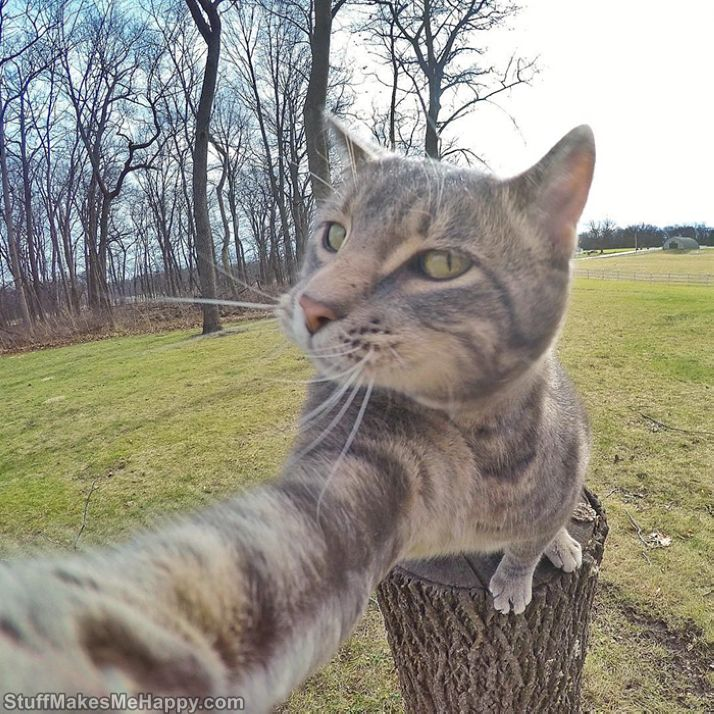 Manny's the Selfie Cat – The Most Adorable Instagram Star and Selfie Master