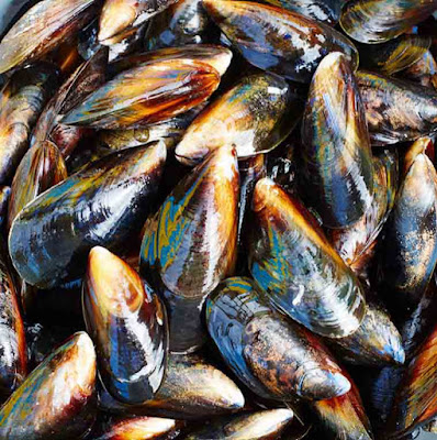 mussels-fish-with-omega-3-fatty-acids-list-picture