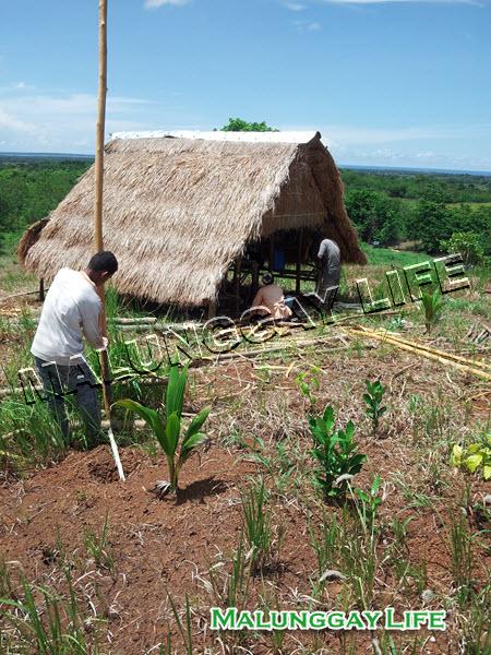 moringa-farm-shelter-hut