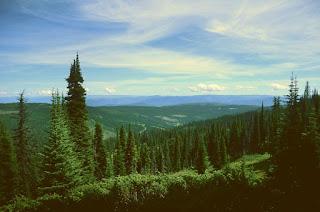 Forêt et vue dans la vallée