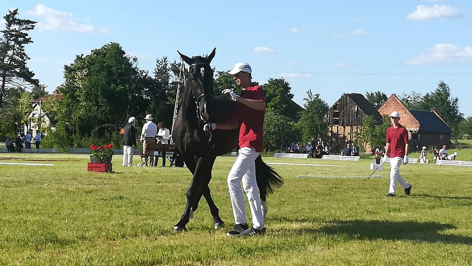 f247db542d254 Pogoda była cudna, słońce przygrzewało aż miło (niestety aparat miał z  jaskrawym słońcem problemy), tłoczno, gwarno i pełno, pełno koni, wymarzona  niedziela ...