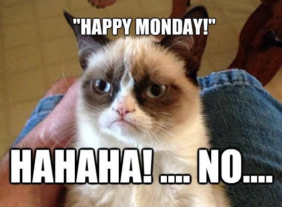 Funny Cat Easter Meme