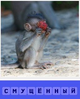 сидит смущенная обезьяна и закрылась цветочком
