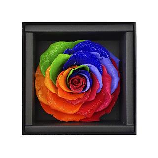 rainbow-lamongan