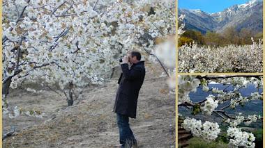 Cerezo en flor 2016 y el Valle del Jerte 2015 desde el aire