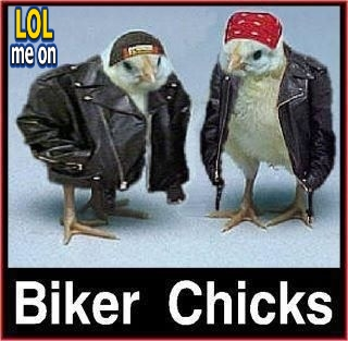 "funny animals picture shows chiks with biker jakets from ""LOL me on"""