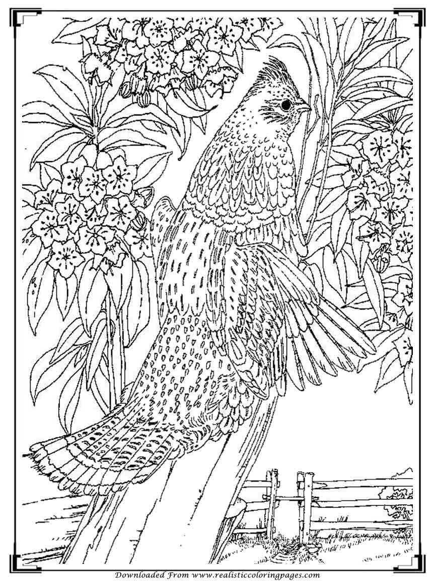 Printable Birds Coloring Pages For Adults  Realistic -7140