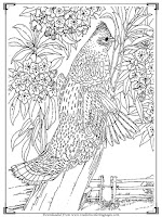 adults coloring pages free bird pictures