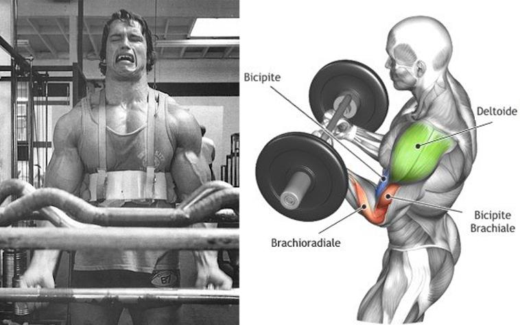 arnold schwarzenegger workout routine for beginners pdf