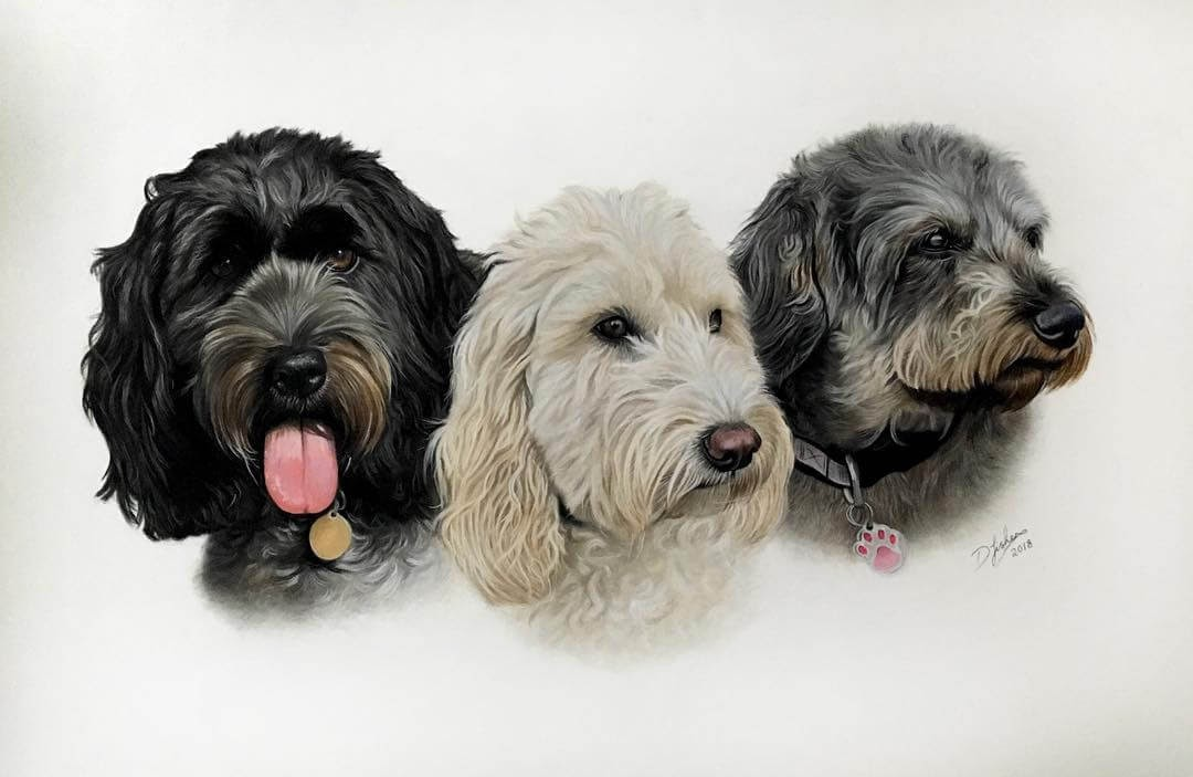 11-Three-Friends-Danielle-Fisher-Dog-Portraits-with-Pastel-Drawings-www-designstack-co