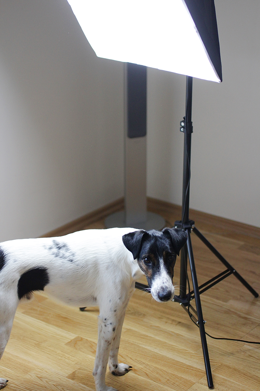 softbox set ebay