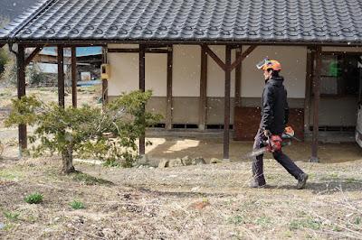 工芸と喫茶ひとつ石の古民家の立派な松を伐採 木を切る人