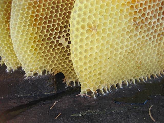 Secret de beauté : la cire d'abeille en cosmétique - Blog beauté Les Mousquetettes