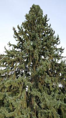 Medicine Hat, Alberta, park, plants, trees