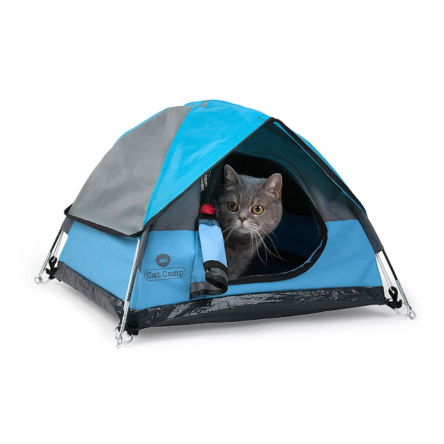 camping with your cat