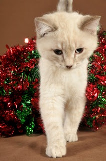When cats climb Christmas trees, they're not trying to be annoying. It's just so much fun!