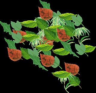 vector,flower,flowers,flower vector,vector flower,vector art,vector ornament,floral,vector flower freebie,vector flower in photoshop,illustrator flower,vector illustration,floral vector